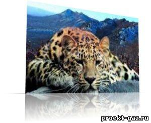 Газопровод вряд ли пройдет через нацпарк Земля леопарда